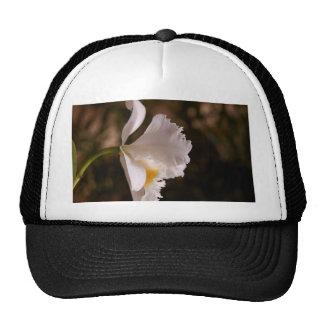 Flor de los pétalos de la orquídea gorros bordados