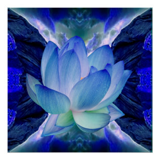 Flor de loto azul póster