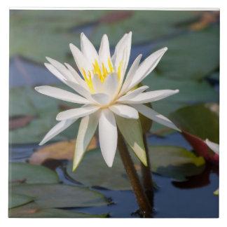 Flor de loto blanco azulejo cuadrado grande