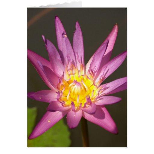 flor de loto felicitaciones
