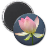 flor de loto imán para frigorífico