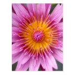 flor de loto postal