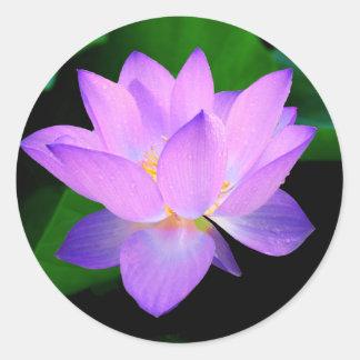 Flor de loto púrpura hermosa en agua pegatina redonda
