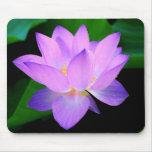 Flor de loto púrpura hermosa en agua tapete de ratones