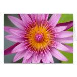 flor de loto tarjetas