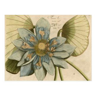 Flor de Lotus azul en fondo del moreno con la Postales