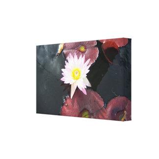 Flor de Lotus con el fondo negro del agua Impresión En Lona