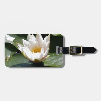 Flor de Lotus del lirio de agua blanca