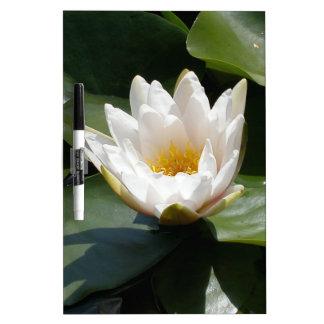 Flor de Lotus del lirio de agua blanca Pizarra