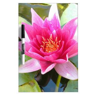 Flor de Lotus del lirio de agua Pizarras Blancas De Calidad