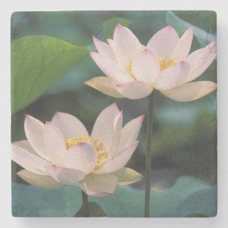 Flor de Lotus en el flor, China Posavasos De Piedra