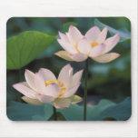 Flor de Lotus en el flor, China Tapetes De Raton