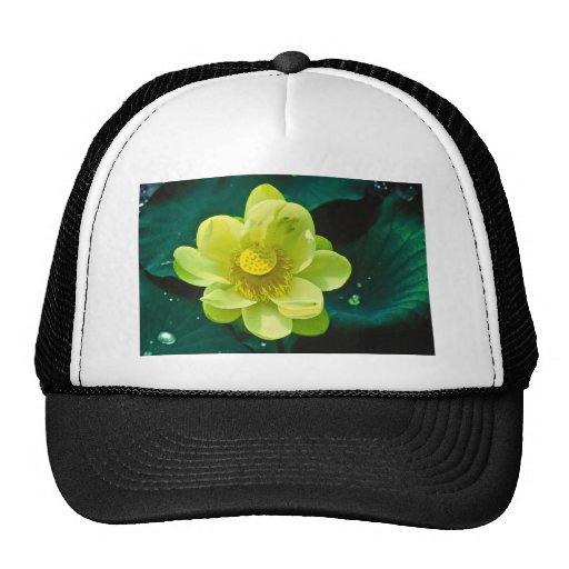 Flor de Lotus Gorro De Camionero