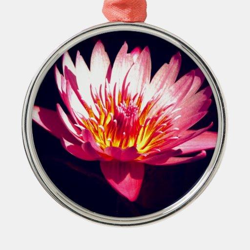 Flor de Lotus maravillosa Ornato
