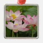 Flor de Lotus, nucifera del Nelumbo, China 2 Adorno Navideño Cuadrado De Metal