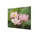 Flor de Lotus, nucifera del Nelumbo, China 2 Impresión En Lona