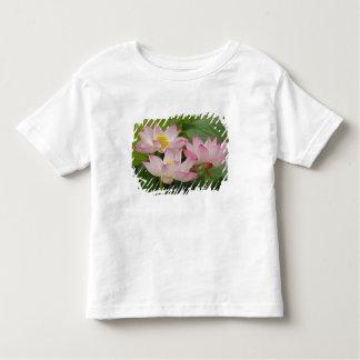 Flor de Lotus, nucifera del Nelumbo, China 2 Playera De Bebé