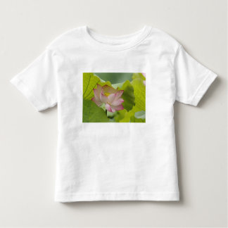 Flor de Lotus, nucifera del Nelumbo, China Playera De Bebé