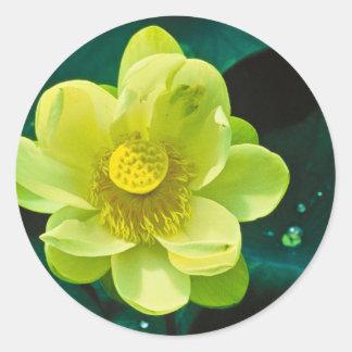 Flor de Lotus Pegatina Redonda