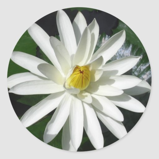 Flor de Lotus Pegatinas
