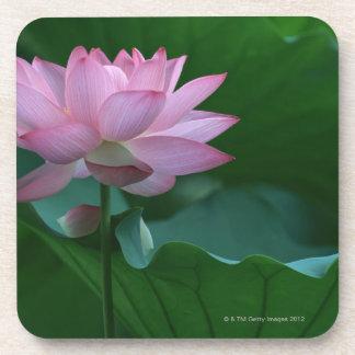 Flor de Lotus Posavasos De Bebidas