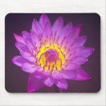 Flor de Lotus púrpura Alfombrilla De Ratón