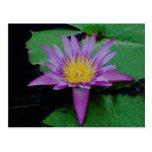 Flor de Lotus púrpura con la postal del cojín de l