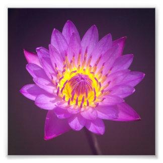 Flor de Lotus púrpura Arte Fotográfico