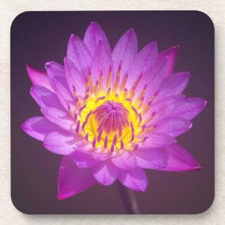 Flor de Lotus púrpura Posavasos De Bebidas