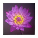Flor de Lotus púrpura Tejas Ceramicas