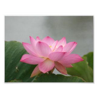 Flor de Lotus rosada Cojinete