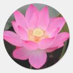 Flor de Lotus rosada en la floración Pegatina Redonda