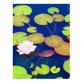 Flor de Lotus rosada que flota con los cojines de Postal