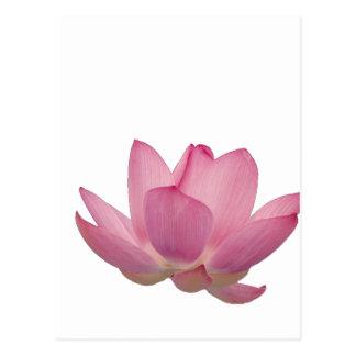 Flor de Lotus rosada Tarjeta Postal