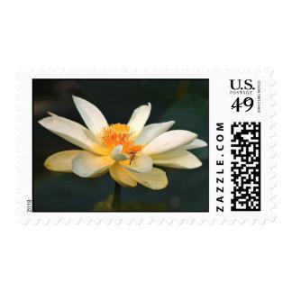 Flor de Lotus Sellos