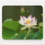 Flor de Lotus Tapetes De Ratón