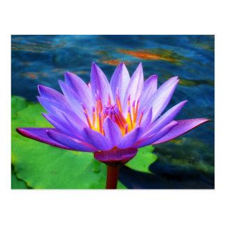 Flor de Lotus Tarjetas Postales