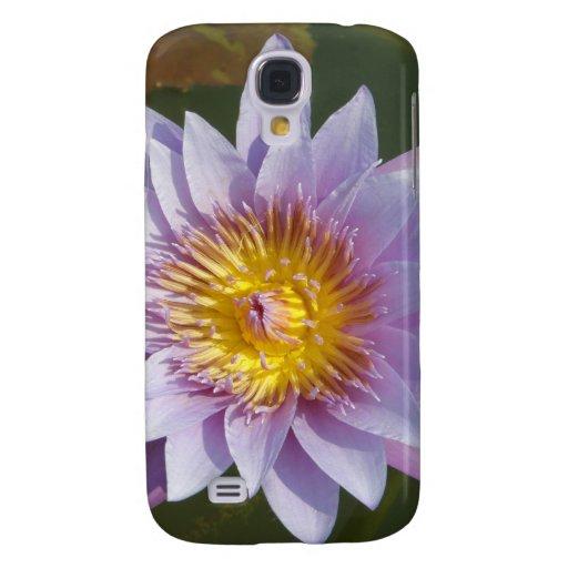 Flor de Lotus/Waterlily