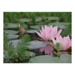 Flor de Lotus/Waterlily Impresiones