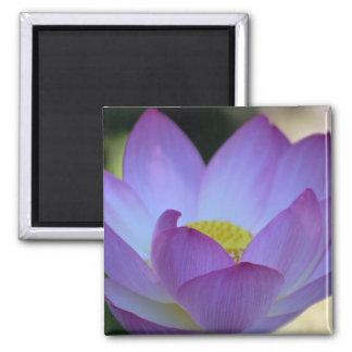 Flor de Lotus y su significado Imanes
