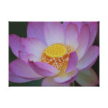 Flor de Lotus y su significado Lona Estirada Galerías