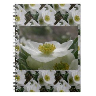 Flor de mayo, narcissiflora de la anémona libro de apuntes
