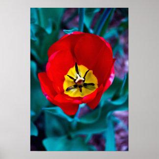 Flor de Myke Borello (impresión del poster) Póster