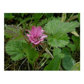 Flor de Nangoon, isla de Unalaska Tarjetas Postales