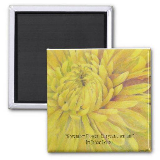 Flor de noviembre: Crisantemo Imán Cuadrado