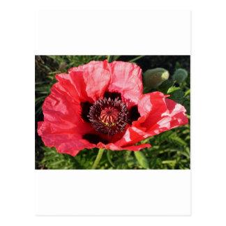 Flor de papel tarjetas postales