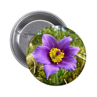 Flor de Pasque