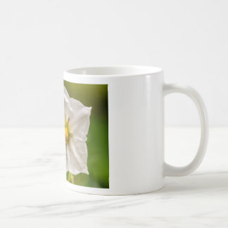 Flor de patata tazas de café