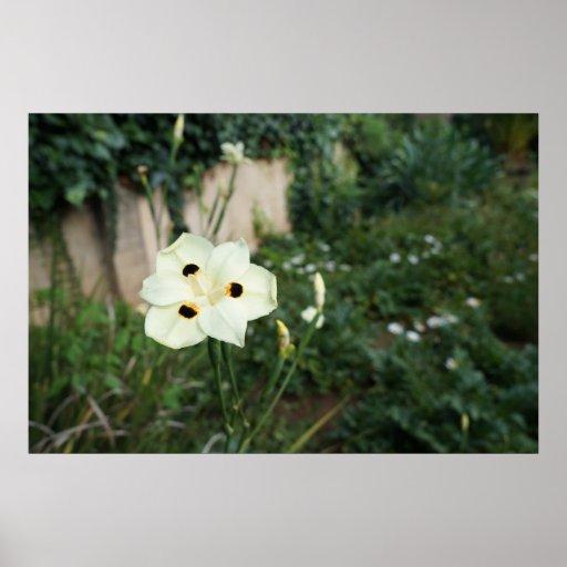 Flor de pavo real del amarillo de la fotografía de posters