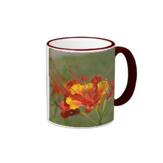 Flor de pavo real taza de café